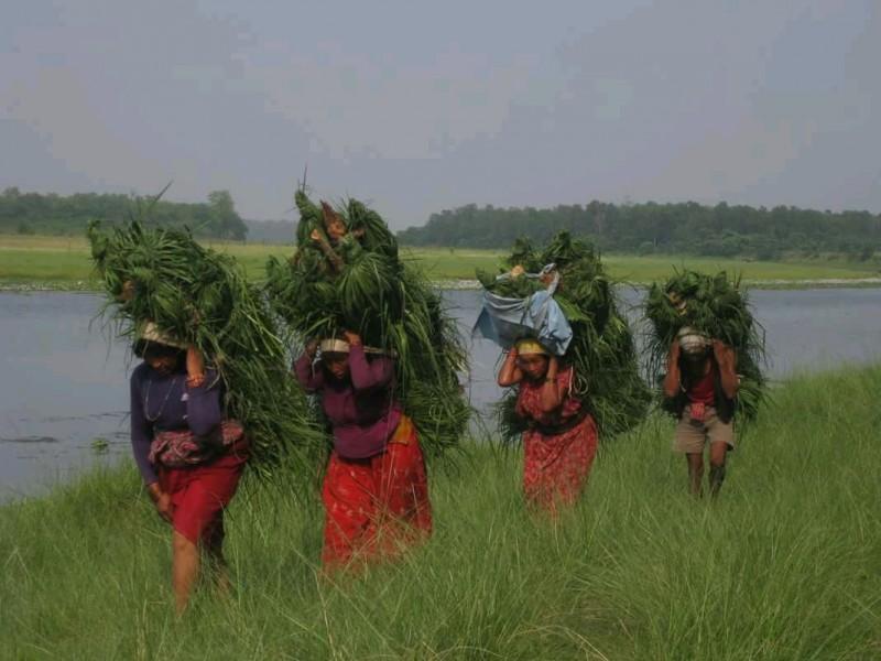 Wild Life Tour @ Chitwan
